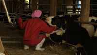 Unforgettable -The Cattle Farmers of Fukushima